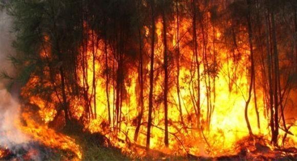 Plusieurs incendies enregistrés : Journée d'enfer à Tizi Wezzu